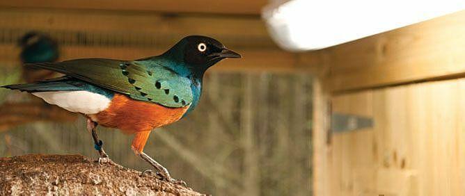 Vogel auf Ast / Arcadia Bird Lamp